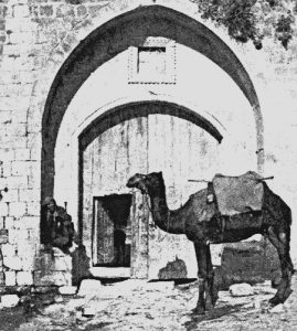 Camel Knees